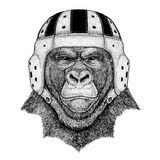 Cool animal wearing rugby helmet Extreme sport game Gorilla, monkey, ape Frightful animal Hand drawn image for tattoo. Gorilla, monkey, ape Frightful animal Hand Royalty Free Stock Photography