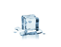 Cool as ice Royalty Free Stock Photo