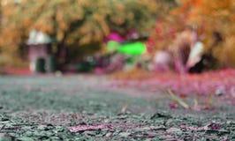 Cool background Autumn season stock photo
