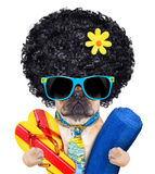 Cool beach dog royalty free stock photography