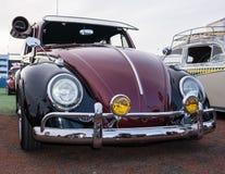 Cool Beetle Stock Photography