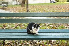 Black and white cat chilling at the bench in the park. Cool black and white cat sitting at the bench Royalty Free Stock Image