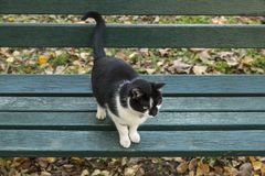 Black and white cat at the bench in the park. Cool black and white cat sitting at the bench in the park Stock Images