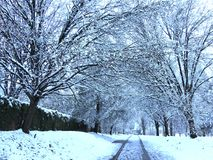 Cool Blue Snow and Driveway Royalty Free Stock Image