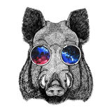 Cool boar picture for beer branding, food branding, posters Fashionable Image for tattoo, logo, emblem, badge design Royalty Free Stock Photo