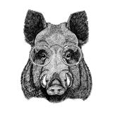 Cool boar picture for beer branding, food branding, posters Fashionable Image for tattoo, logo, emblem, badge design Stock Image