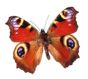 Cool butterfly Royalty Free Stock Photography