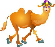 Cool Camel Stock Images