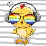 Cute Chicken with sun glasses Stock Photography