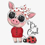 Cute Pig with sun glasses. Cool Cartoon Cute Pig with sun glasses Stock Photo