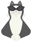 Cool cat Stock Photography
