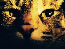 Cool Cat. Cat kitty abstract face closeup stock images