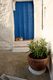 Spanish cat keeps cool in front of rustic blue door. Royalty Free Stock Photos