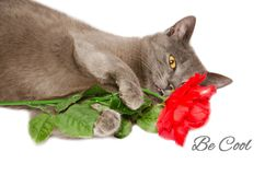Cool cat with rose Stock Images
