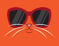 Cool Cat Sunglasses Stock Images