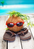 Cool coconut adventurer. Humorous spoof of a cool coconut adventurer with a leafy hairstyle and trendy red sunglasses Royalty Free Stock Photography