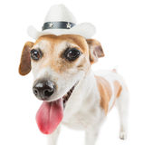 Cool Cowboy dog Royalty Free Stock Images