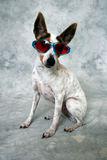 Cool Dog. This crazy dog is posing and wearing sunglasses Stock Photos