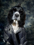Cool dog. Tough dog with an attitude and leather jacket Royalty Free Stock Photo