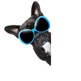 Cool dog Stock Images