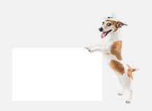 Cool dog with cowboy hat Stock Photo