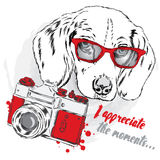 Cool dog with glasses and a camera. Stock Photo