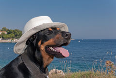 Cool dog with hat enjoying the sun Royalty Free Stock Photos
