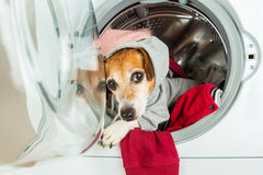 Cool dog muzzle stares from washing machine. Sport style relaxed weekend work. Laundry and dry cleaning pet service Royalty Free Stock Photography