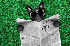 Cool dog newspaper Royalty Free Stock Photos