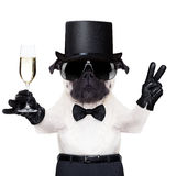 Cool dog peace. Pug with a champagne glass and victory or peace fingers toasting for new year wearing a black hat royalty free stock image
