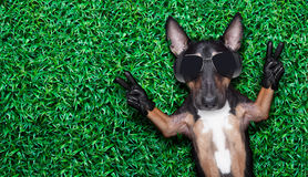 Cool dog Stock Photo