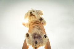Cool dog playing with his owner Royalty Free Stock Images