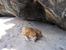 Cool dog sleeping on the beach Royalty Free Stock Photos