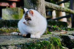 A cat that is deeply attracted by something. On the cool early winter morning, a cat sits quietly on the side of the road, and it seems to be deeply attracted by royalty free stock photo