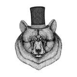 Cool and fashionable black bear Vintage style Engraving Image for tattoo, logo, emblem, badge design. Cool and fashionable black bear Image for tattoo, logo Stock Images