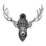 Cool fashionable deer Hipster animal Vintage style illustration for tattoo, logo, emblem, badge design Stock Image