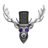 Cool fashionable deer Hipster animal Vintage style illustration for tattoo, logo, emblem, badge design. Cool fashionable deer Vintage style picture for tattoo Royalty Free Stock Image