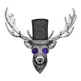 Cool fashionable deer Hipster animal Vintage style illustration for tattoo, logo, emblem, badge design Royalty Free Stock Image