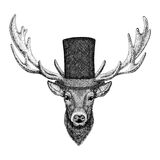 Cool fashionable deer Hipster animal Vintage style illustration for tattoo, logo, emblem, badge design. Cool fashionable deer Vintage style picture for tattoo Royalty Free Stock Photo