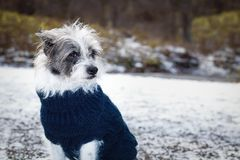 Freezing icy dog in snow Royalty Free Stock Photos