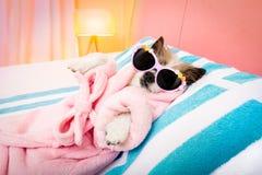Dog spa wellness salon Stock Image