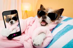 Dog spa wellness salon selfie royalty free stock photo