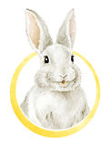 Cool Funny Smiling Bunny. Royalty Free Stock Photography