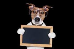 Cool glasses dog Stock Image