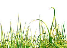 Cool green grass Stock Photos