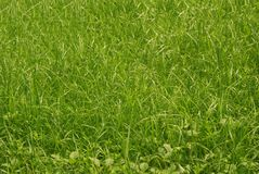 Cool green grass background. Cool green grass in the field stock photo