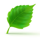 Cool green leaf Stock Photo