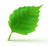 Cool green leaf vector illustration