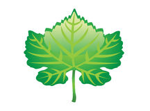 Cool green leaf Royalty Free Stock Photo