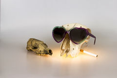 Cool heads. Conceptual image of two animal skulls Royalty Free Stock Photography